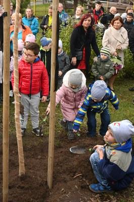 Děti zasadily na školní zahradě lípu Sametku
