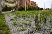Kruhový objezd v Hrabůvce zkrášlilo 8800 rostlin