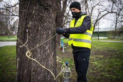 Ostrava pokračuje v boji proti klíněnce, ošetřeny budou stovky jírovců