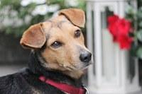 Pozor! Poplatek za psy je nutno zaplatit do 31. března