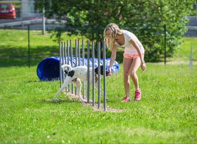 Probíhá hromadné očkování psů proti vzteklině