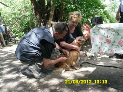 Psi od bezdomovců byli naočkováni