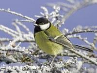 Ptačí chřipka  - informace pro veřejnost