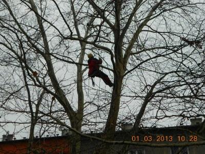 Zajištění stromů proti poškození