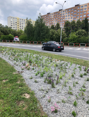 Kruhový objezd v Hrabůvce ožívá 8.800 vysazenými rostlinami